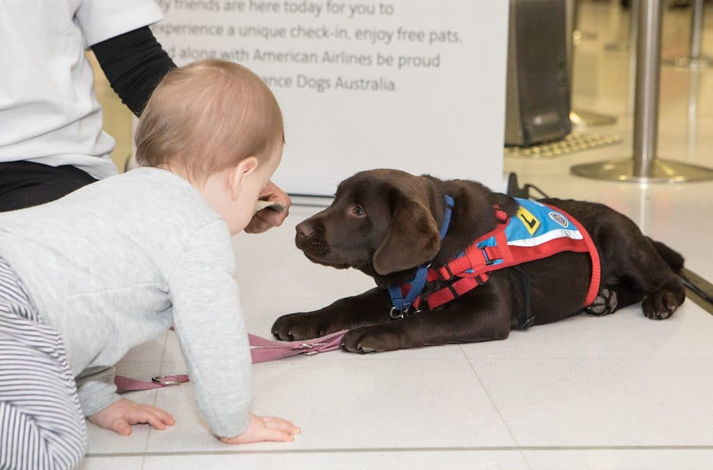 American Airlines loves our high-flying pups
