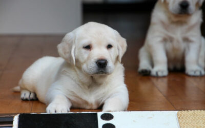 Postcards from Puppyland
